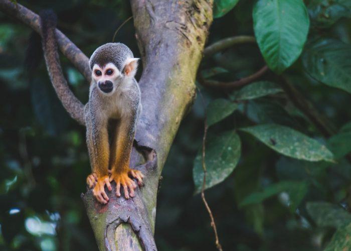Isla de los micos © Diego Guzmán on Unsplash