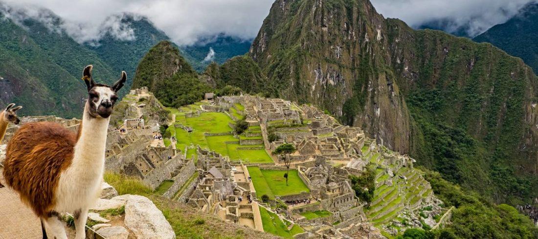 Lama, Machu Picchu, Peru