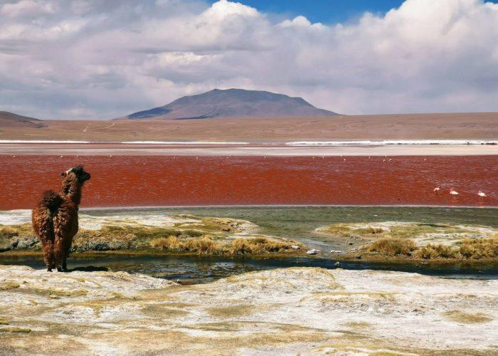 Lama, Sur Lipéz, Bolivien © Mariana Proença on Unsplash