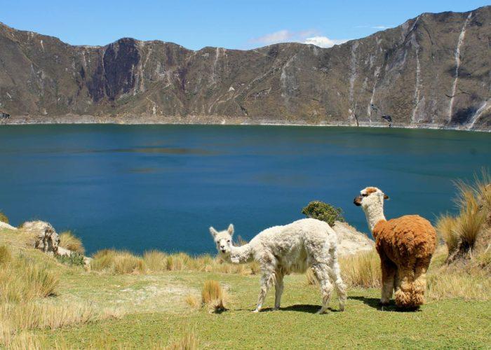 Lamas, Kratersee, Quilotoa, Ecuador