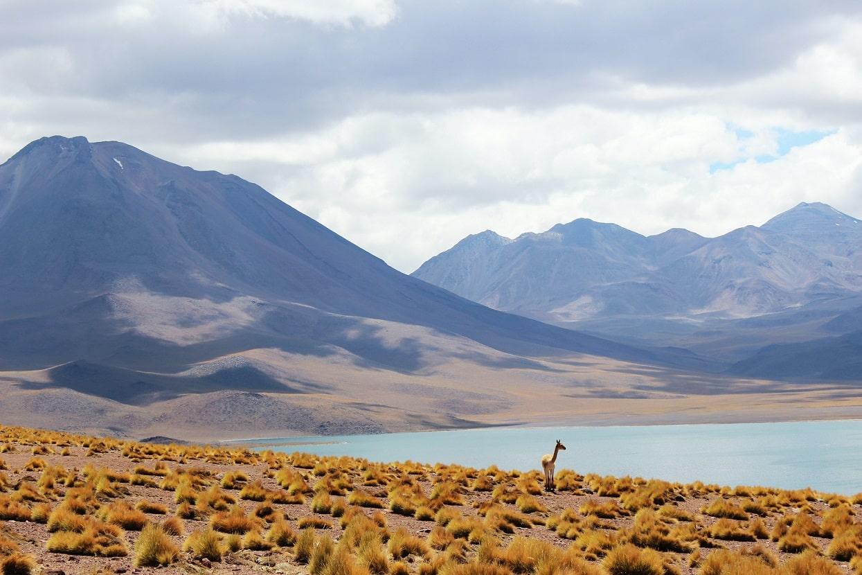 Los Flamencos National Reserve, Chile © Paula Porta on Unsplash