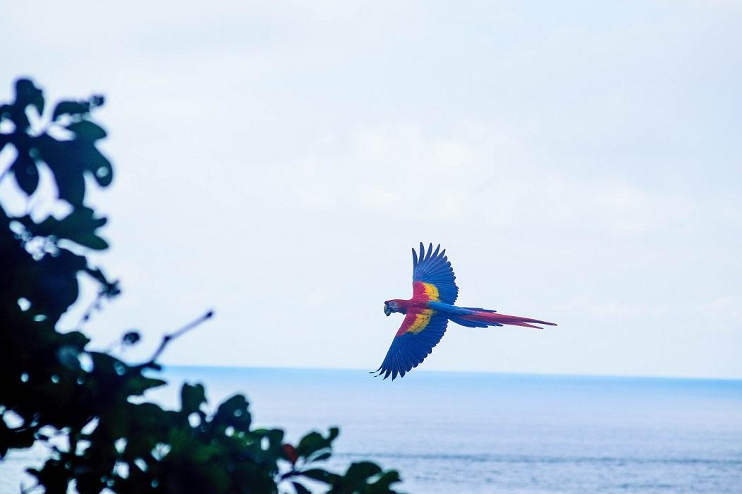 Papagei, Costa Rica © Dan Hadfield on Unsplash