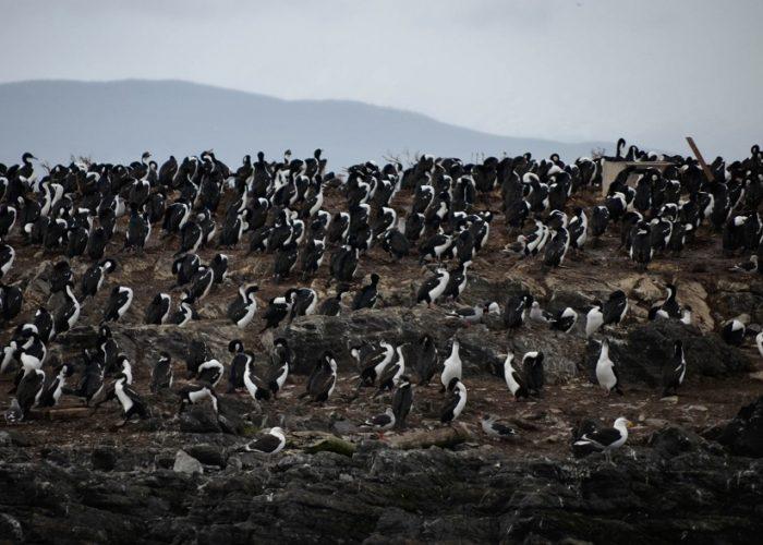 Pinguine, Ushuaia, Tierra del Fuego, Argentinien © Elisa Kerschbaumer on Unsplash