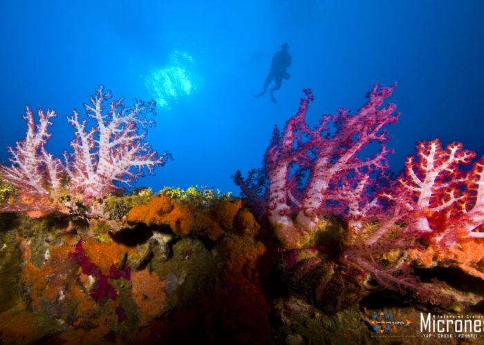 Tauchen, Chuuk © FSMVB