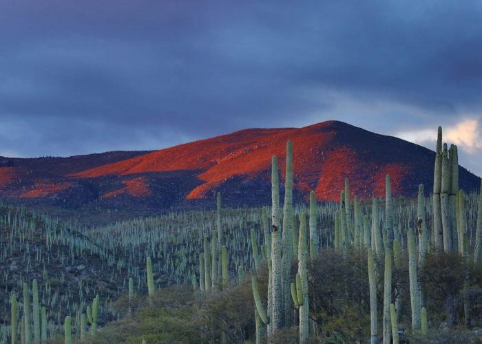 Wüste, Zapotitlan, Mexiko © Andrés Sanz on Unsplash