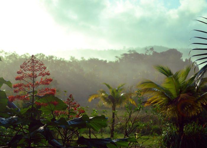 Regenwald, Französisch Guyana