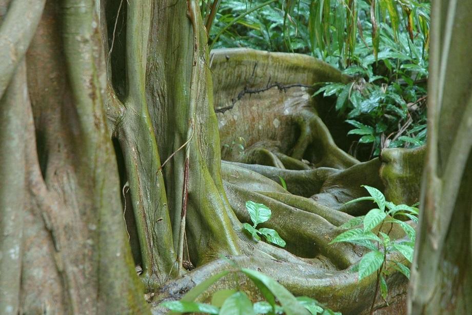 Dschungel, Belize