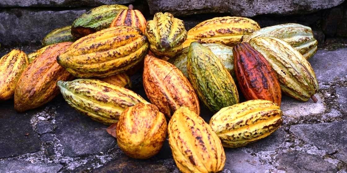 Kakaofrüchte, Belize