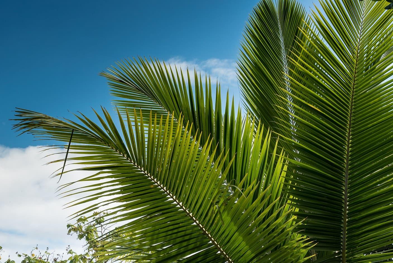 Palme © PerryVision-Peter Kreuzer