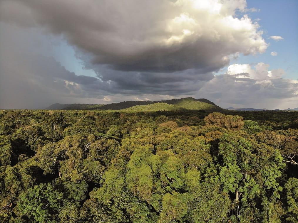 Surama Rainforest, Guyana © David Di Gregorio