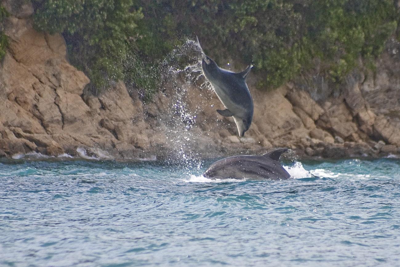Delfine, Kaikoura © Rupert Kogler