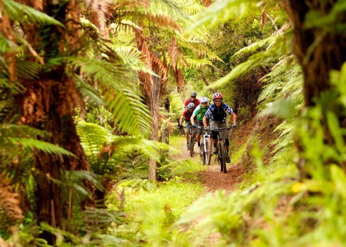 Kawakawa Bay Track, Rotorua © Tourism New Zealand