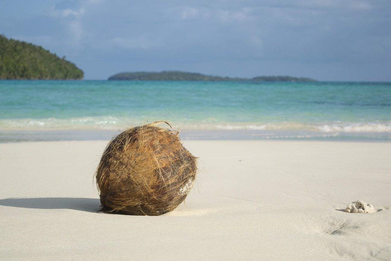 Kokosnuss, Reef Resort Vava'u, Tonga