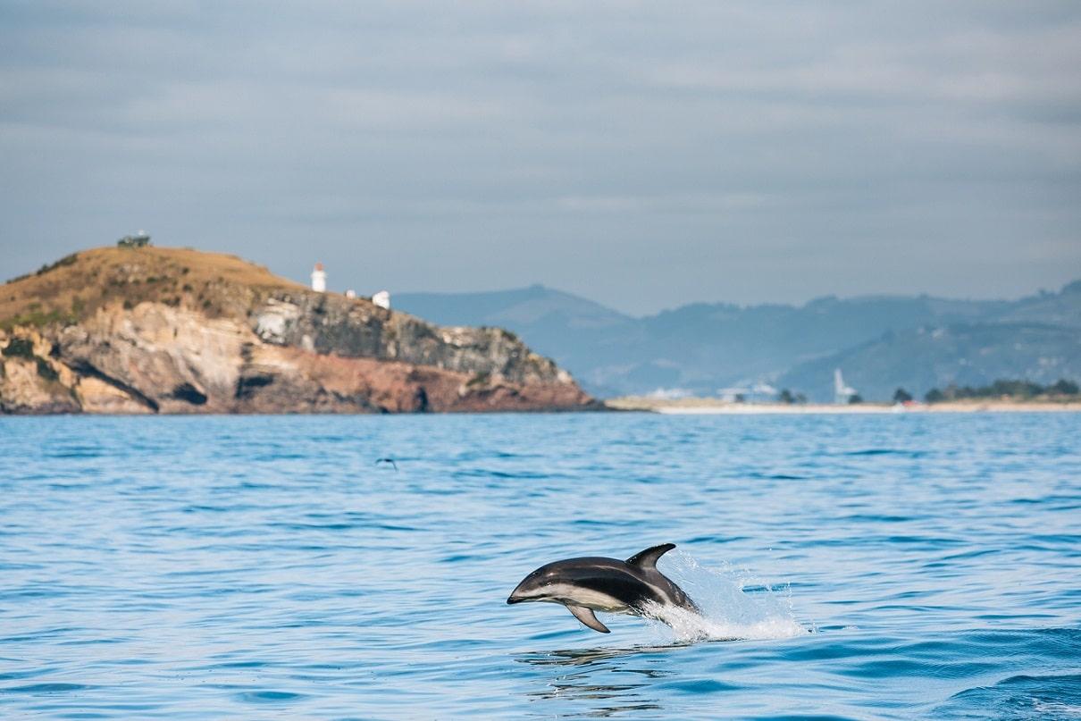 Delfin © Chris Stephenson