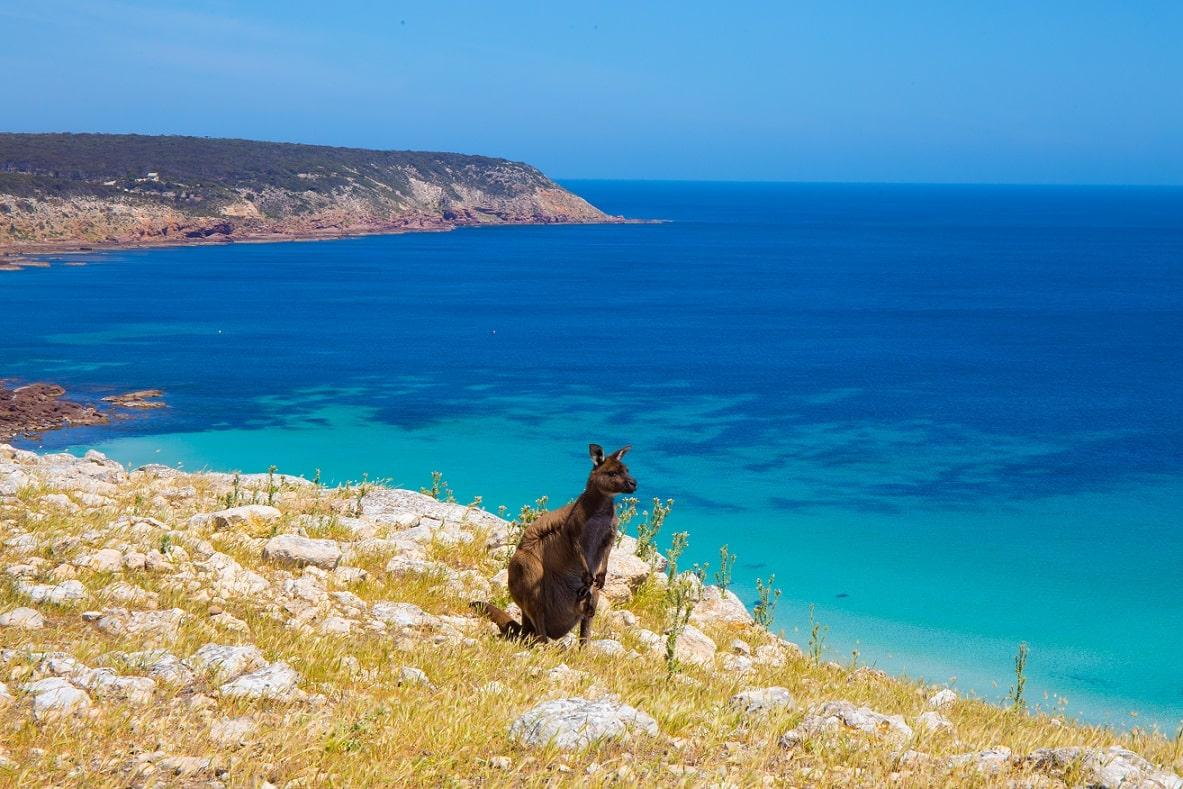 Stokes Bay, Kangaroo Island © Lachlan Swan