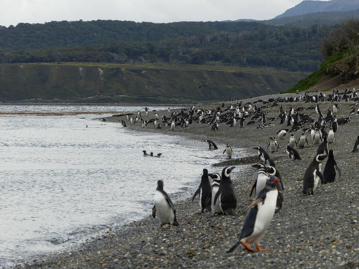 Isla Martillo, Ushuaia, Tierra del Fuego